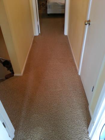 Carpet Repair by Complete Clean Water Extraction